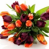Awesome tulip bouquet