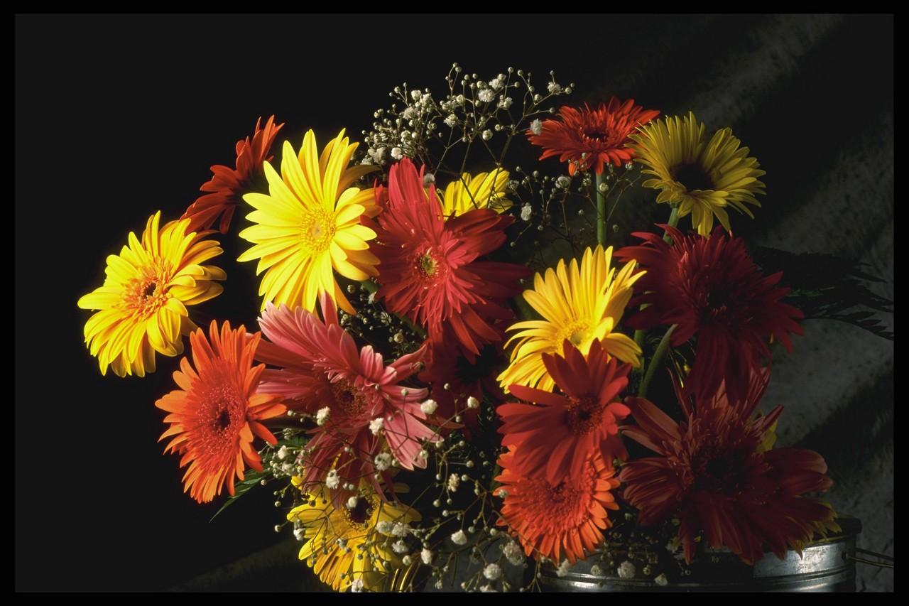 Поздравления ко дню карантина растений