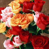 A beautiful bunch of colorful roses