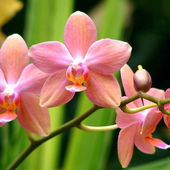 Lovely pink orchid