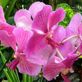 Attractive orchid