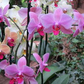 Amazing orchids