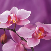 Quite attractive orchids