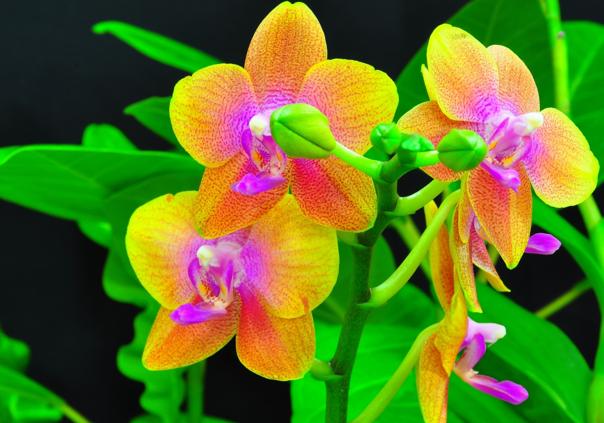 Really awesome orchids