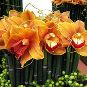 Gold orchids