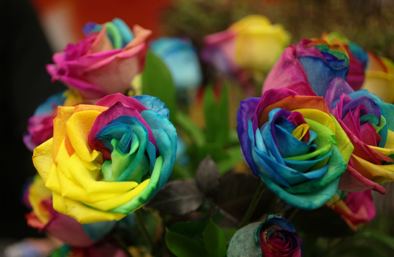 Rainbow roses for Where to get rainbow roses