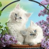 Cute Kittens and Pretty Flowers