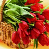A basket of tulips