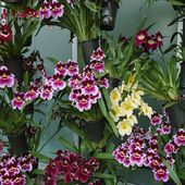 So lovely orchids