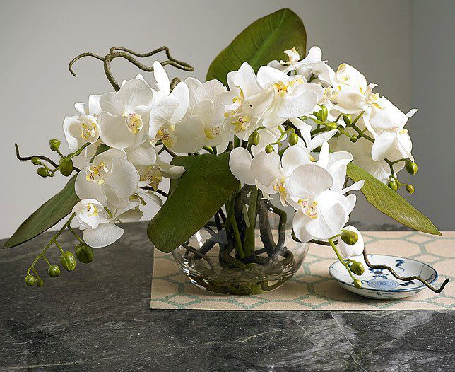 Amazing white orchids