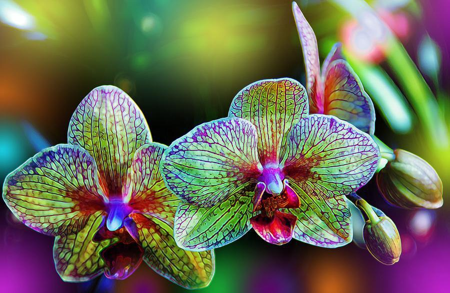 Do you like unusual orchids