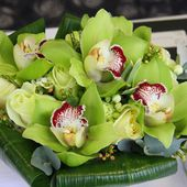 Amazing green orchids