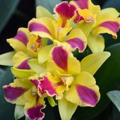 Most fabulous orchids