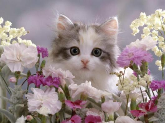 Adorable Kitten and Pretty flowers