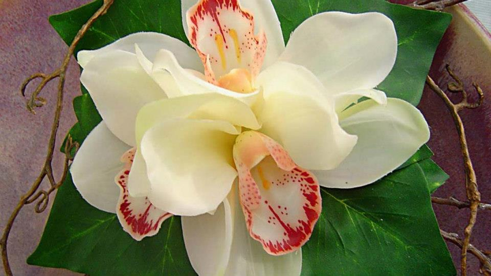 Breathtaking fantastic orchid