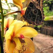 Yellow orchid and butterfly