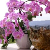 pink orchids and cute cat