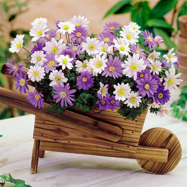 nice flowers decoration, Beautiful flower