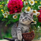 Kitten Loves Flowers