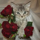 Kitten loves roses!