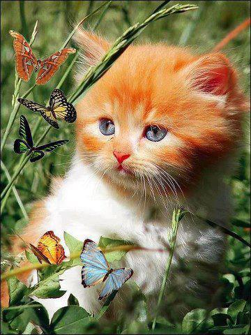 So cute kitten and butterflies