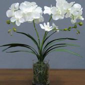 love these white orchids..share if you love it