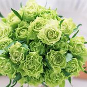 Awesome green roses