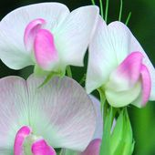 Really nice orchids