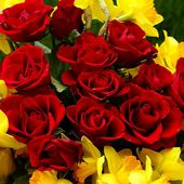Red roses and daffodils