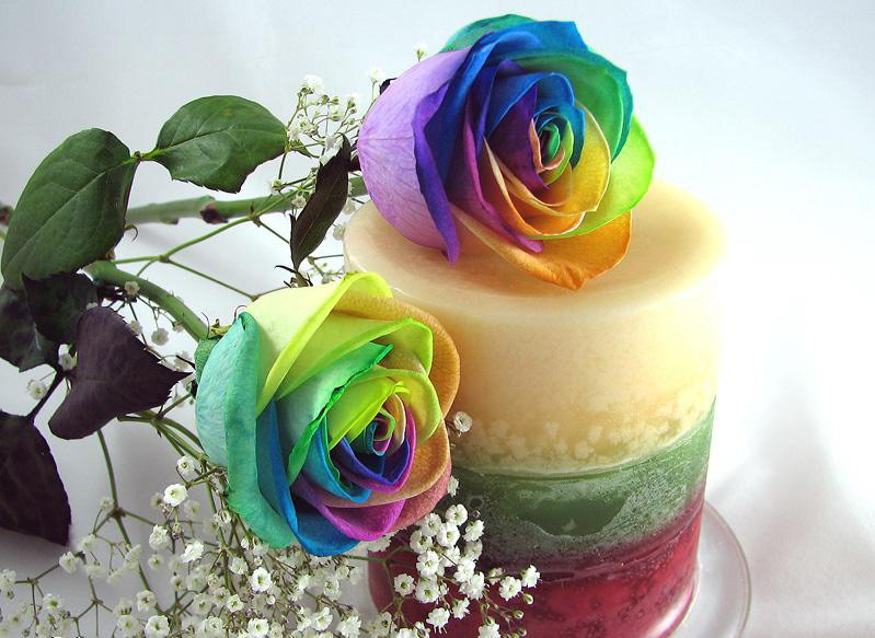 how to make rainbow roses video