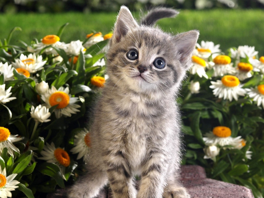 So cute kitten