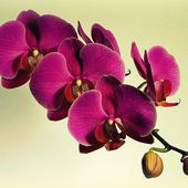 Very beautiful orchids