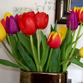 So lovely tulips