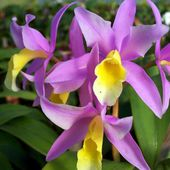 A beautiful orchids.. Share now