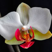What a nice orchid!