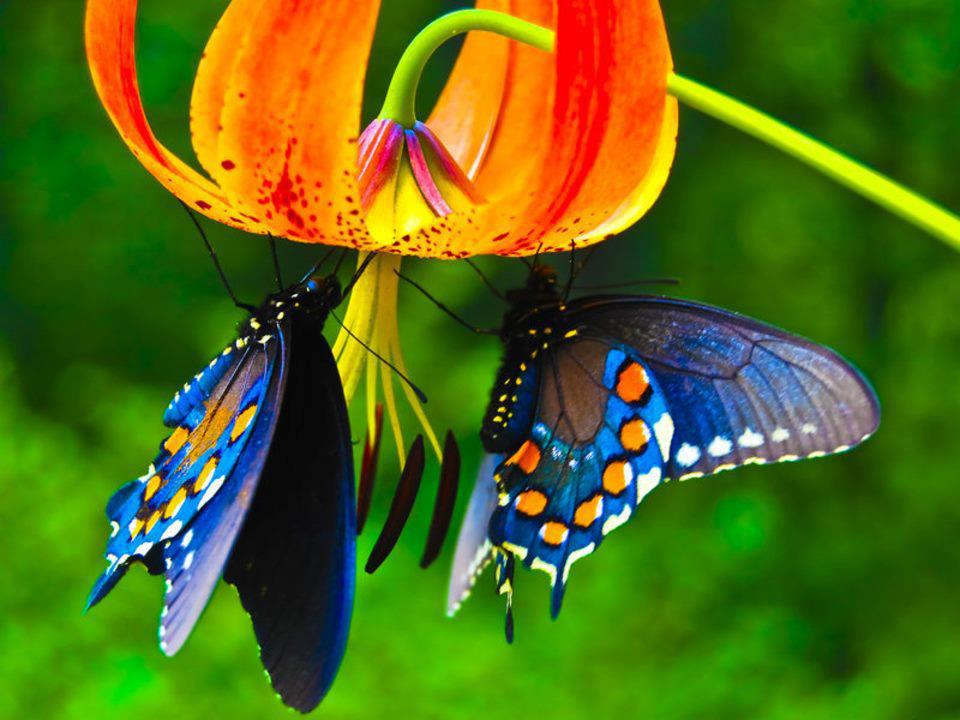 Two Awesome Butterflies