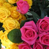 Bright and colorful roses