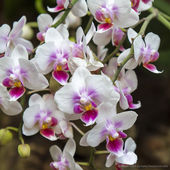Beautiful orchid bush