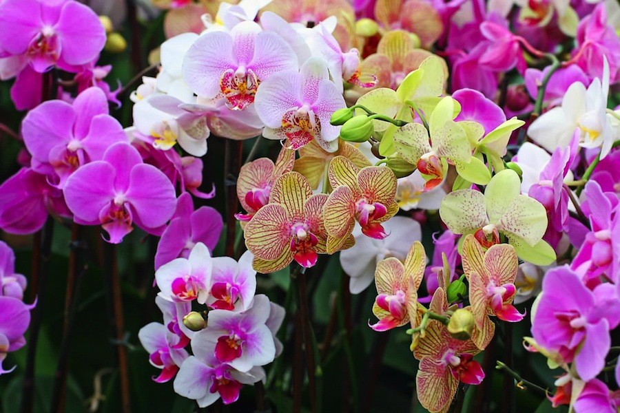 So wonderful orchids!