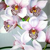 Awesome looking orchids