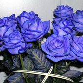 Lovely bouquet of blue roses