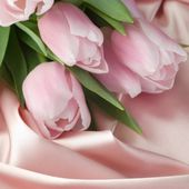 Pink tulips on pink silk