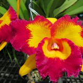 Bight and colorful orchid