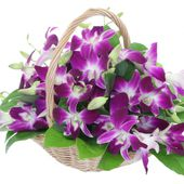Bright and colorful pink orchids