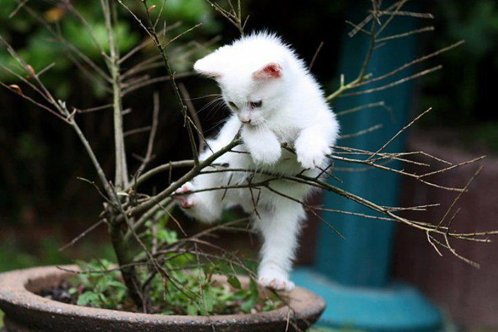 Adorable kitty plays with a plant