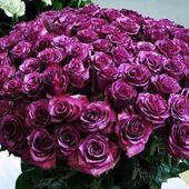A huge purple roses bouget