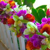 Amazing orchids!