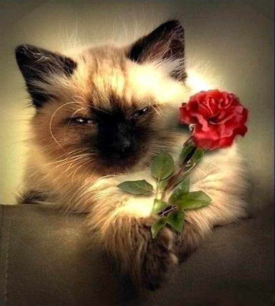 Nice rose for You