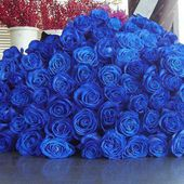 Huge bunch of blue roses