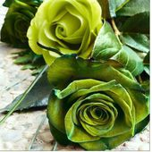 Two green roses